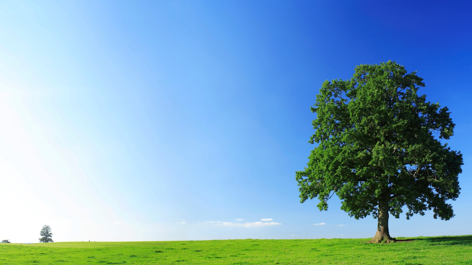 Tree, grass and big blue sky